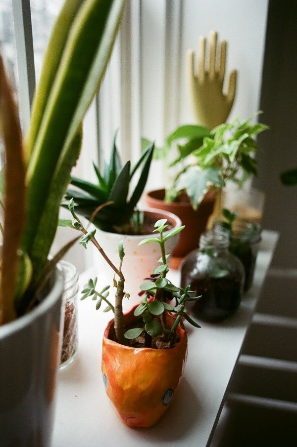 potted window sill