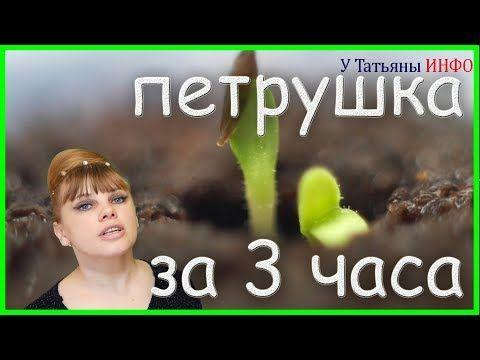 (277) ПОТРЯСНО!!! Семена ПЕТРУШКИ проклюнутся через 3 часа? - YouTube