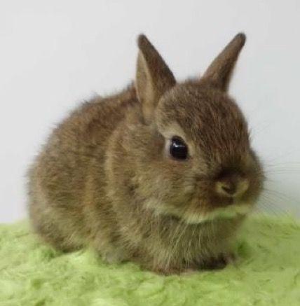 Best 25 Dwarf Bunnies Ideas On Pinterest Netherland