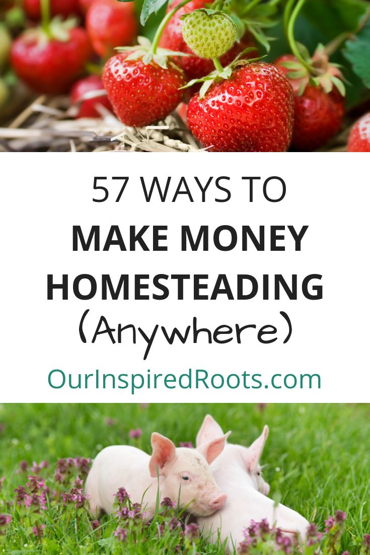 57 Ways to Make Extra Money Homesteading (Anywhere) – Best of Our Inspired Roots