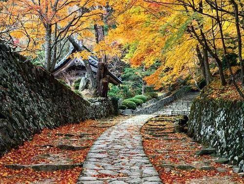 Autumn Cottage in Japan
