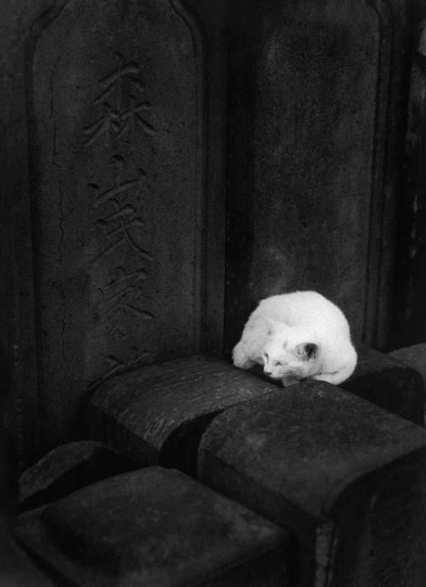 Yuichi Hibi. S)