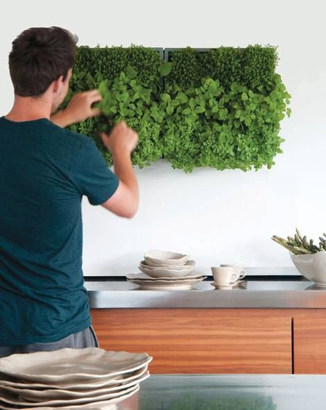 ▷ Green wall ▷ Refined eye-catcher for the apartment