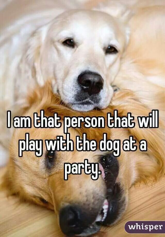 I'm that person that will play with the dog at the party