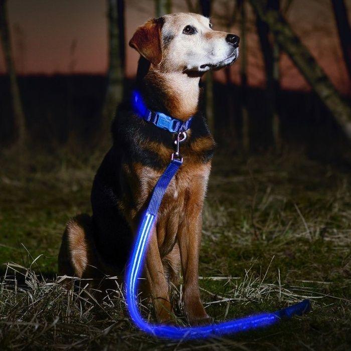 Rank & Style - Illumiseen LED Dog Leash #rankandstyle