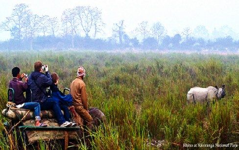 Rhino safari at Kaziranga National Park in Assam has become a great attraction of travelers. A brief outline of the tour will help you a lot in this regard.