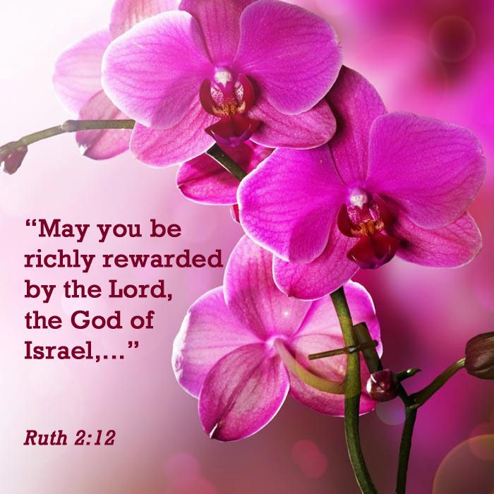 """Ruth 2:12 - """"May you be richly rewarded by the Lord, the God of Israel,..."""""""