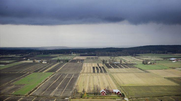 Ilmastonmuutos muuttaa säätä ja sitä kautta myös viljelyä niin Suomessa kuin maailmallakin. Asiantuntijat ovat huolissaan siitä, että Suomi ei ole omavarainen.