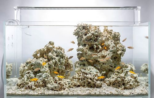 Favourites: Lake Tanganyika style by Aquarium Design Group  Some hardscapes are just too beautiful to add green to them. Aquascaping without plants (not to mention that very little plants would  thrive in these water parameters).