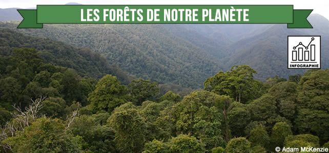 Infographie+sur+les+forêts+de+notre+planète+:+menaces+et+enjeux
