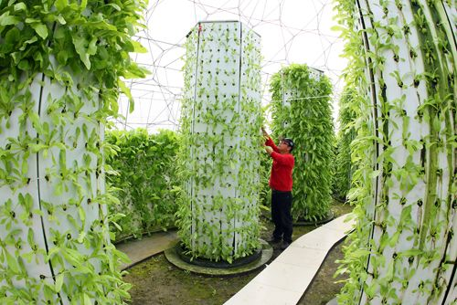 Soilless agriculture such as aquaponic farming using fish water instead of artificial liquid fertilizer. Works just as well if not better than the hydroponics seen here