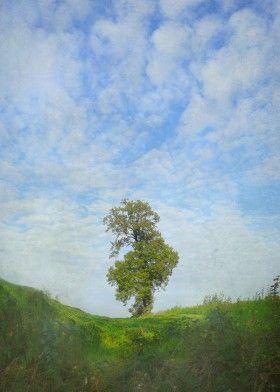 #tree #sky #flora #photograph #nature #landscape #solitaire #readyToHangArt ##homeDecoration #giftIdea #canvas