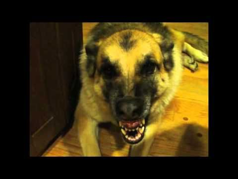 Best of 2011 Ultimate Talking Dog Video
