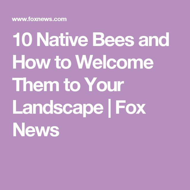 10 Native Bees and How to Welcome Them to Your Landscape | Fox News
