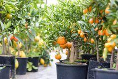 Voici des plantes comestibles qu'on peut faire pousser facilement à la maison