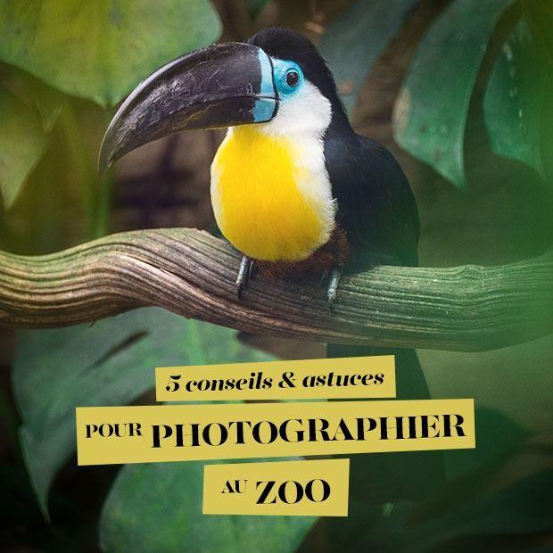5 conseils & astuces pour photographier au zoo