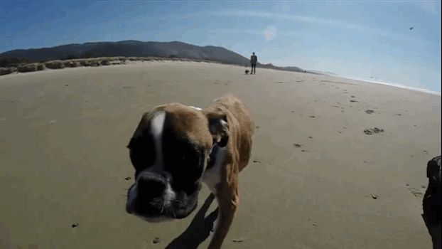 """(Bipawd?) """"There is some slow motion in this video, but NONE of the video has been sped up,"""" Panda Paws Rescue says. """"This gives you an idea of how fast Duncan really is."""" 