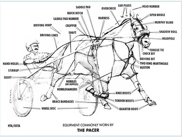49 best old harness racing photos images on pinterest