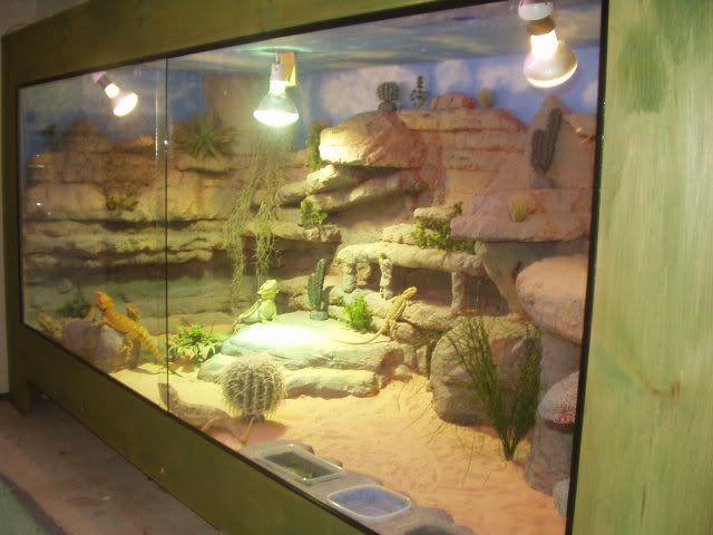Best 25+ Reptile tanks ideas on Pinterest | Lizard ...