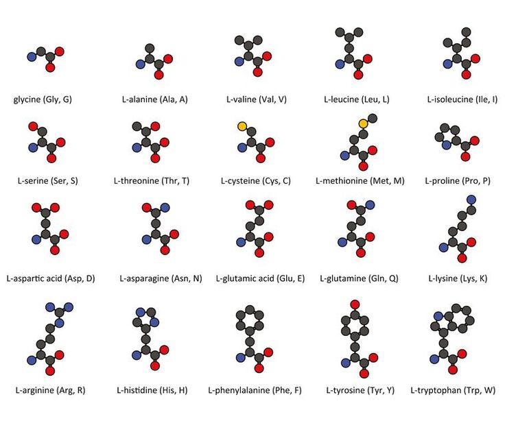 The 20 Amino Acids Science for Secondary Grades Biology - amino acid chart