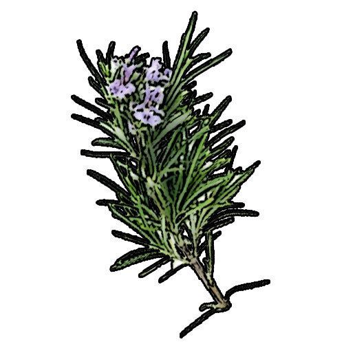 Rosemary Essential oil 100% Pure and natural essential oil in 100ml amber bottle