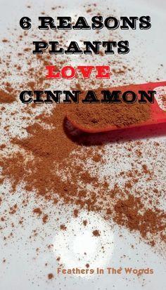 cinnamon in gardening