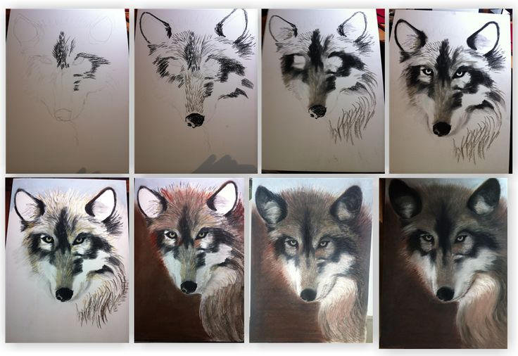 vlk náhled
