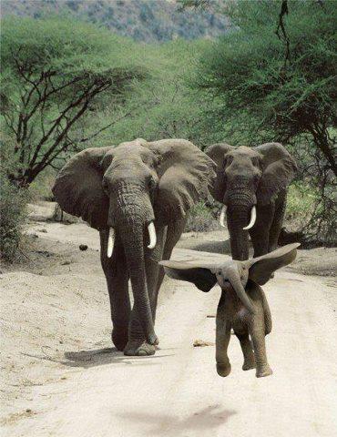 Funny Wildlife, funnywildlife: Baby Dumbo the Flying Elephant,...