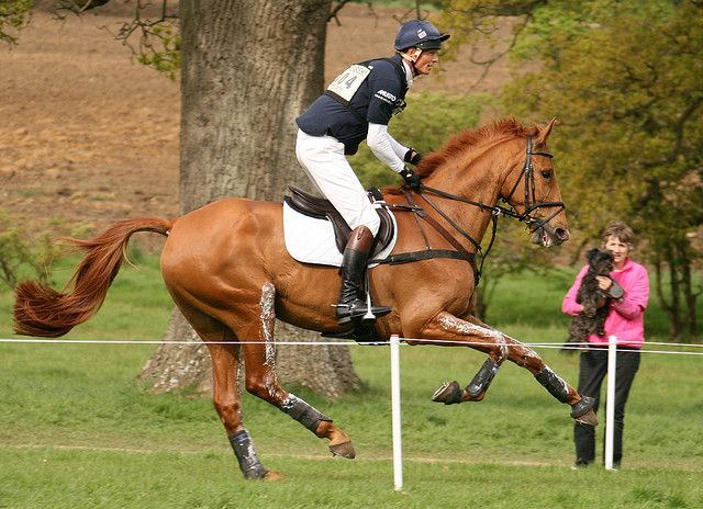 William Fox-Pitt & Idalgo....one of my favorite riders to watch. He's so good and I'm also VERY tall so watching how he rides is interesting.