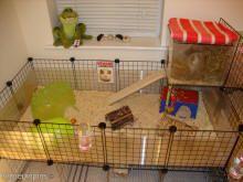 @Gabby Meriles anderson  C DIY Guinea Pig Cages