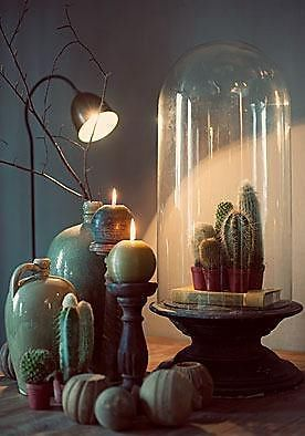 Shine the light on a cactus vignette.