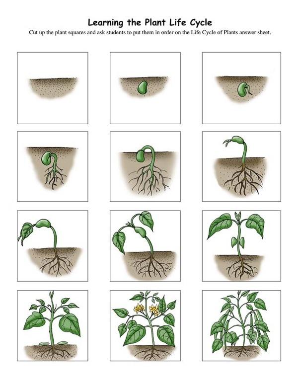 Les plantes : différentes expériences