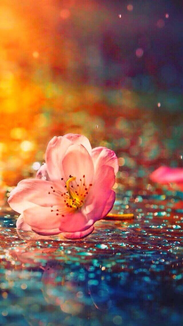 Love Of Beauty Is Taste The Creation Of Beauty Is Art Ralph Waldo Emerson Love I In 2020 Nature Photography Flowers Photography Beautiful Flowers Wallpapers