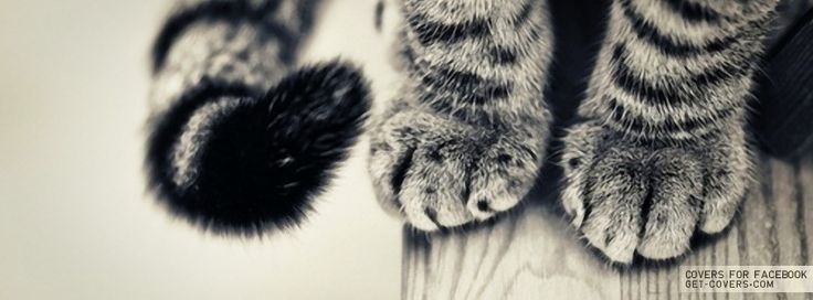 Cat Paws Facebook Timeline Cover photos