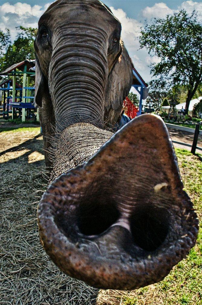 Elephant ~ http://www.amazon.com/Elephant-Whisperer-Life-Herd-African/dp/125000781X/ref=sr_1_1?s=books=UTF8=1342814421=1-1=elephant+whisperer