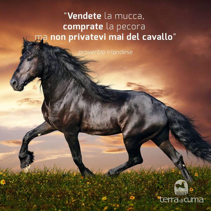 Saggi consigli #irlandesi #citazioni sui #cavalli di #terradicuma