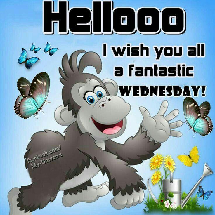 Hello Happy Wednesday Happy Wednesday Quotes Good Morning