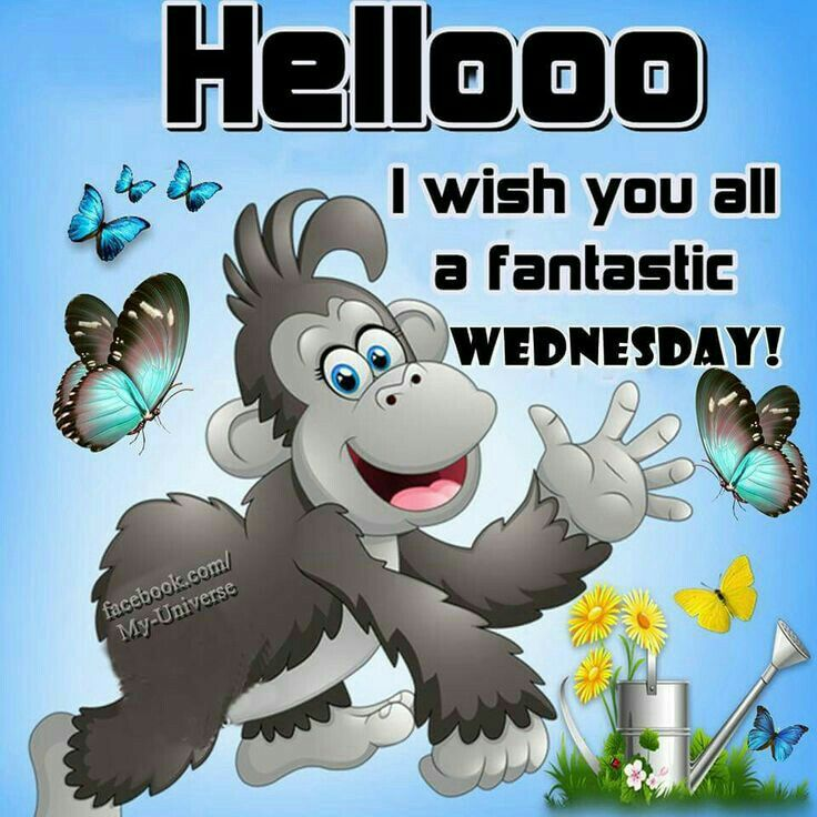 Hello. Happy Wednesday   All Week Greetings   Wednesday ...