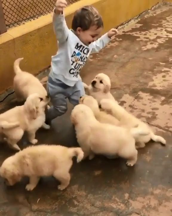 cute dogs videos funny