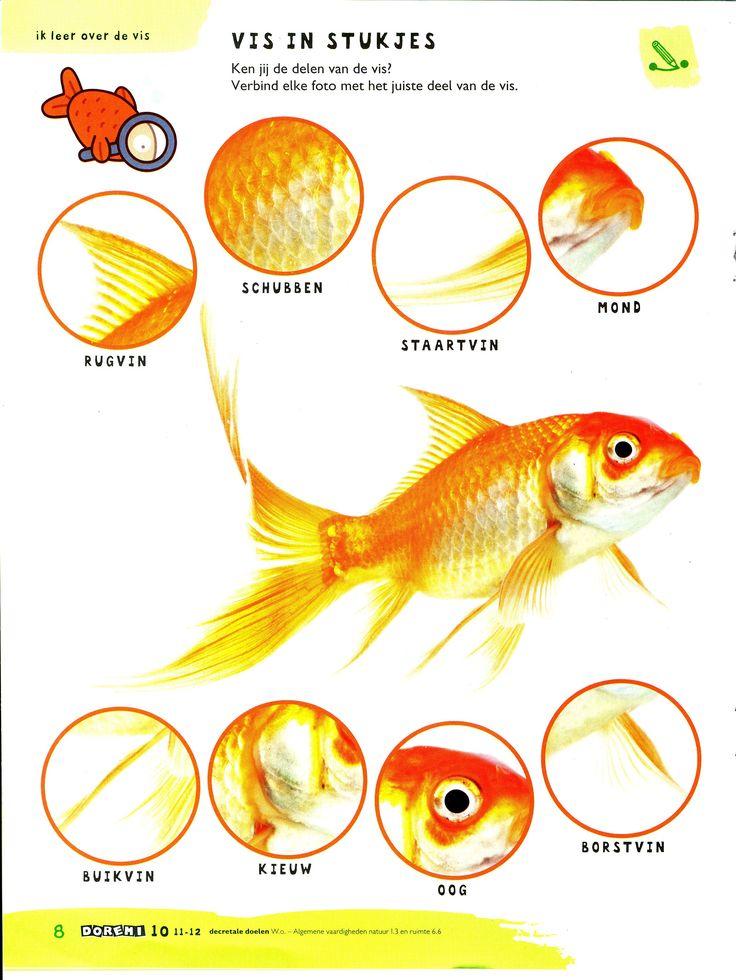 Huisdieren: De vis: delen