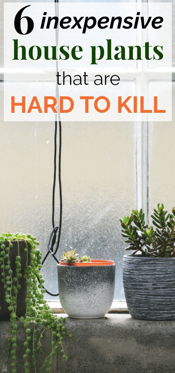 6 Fun And Hard To Kill House Plants This Post About Six Of The Easiest Care For Is So Helpful I Love That They Re All Inexpensive