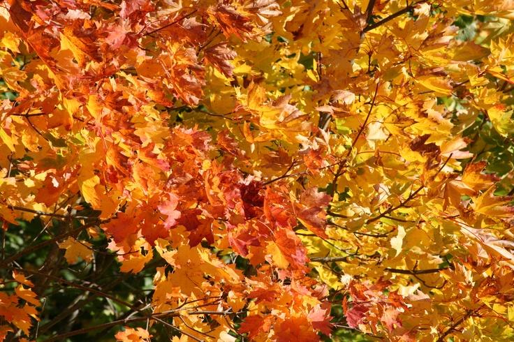 Autumn in Linköping