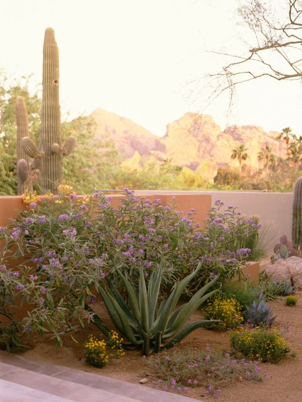 78+ images about Palm Springs Style Gardening in the ...