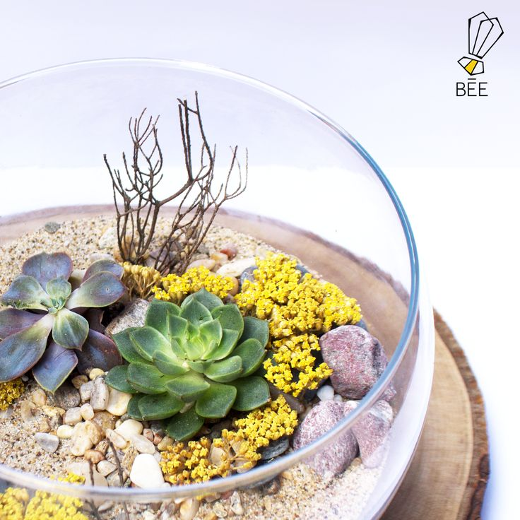 Sukulentin terraryum hali... Sipariş için: zeynep@beedesignandflowershop.com adresinden iletişime geçebilirsiniz. #beedesignandflowershop#seashell #denizkabugu #art #design #decoration#interiordesign #indoorgardening #nature #plant#green #sculpture #flower #concept #handmade#succulent #çiçek #tasarım #bitki #yeşil #aranjman#arrangement #denizalti #submarine #airplant#çiçektasarımı #deepblue#underthesea