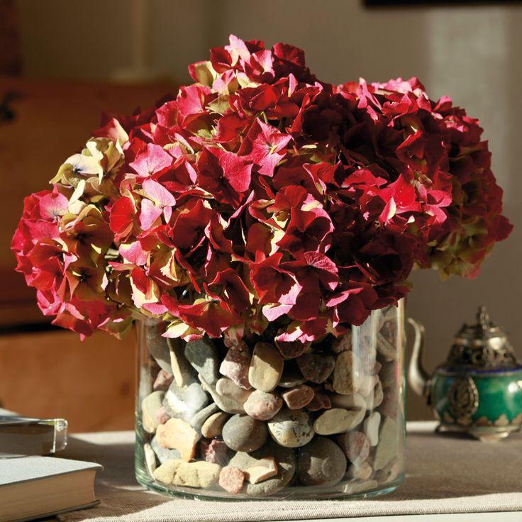 In der Steinfüllung der Glasvase verbirgt sich eine kleine Dose, aus der die frisch geschnittenen Hortensien-Blüten für einige Tage Wasser ziehen, um danach langsam auszutrocknen. Leicht verblasst halten sie dann fast unbegrenzt.