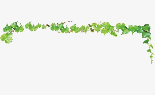Ivy Vine Vine Clipart Branch Frame Png Transparent Clipart Image And Psd File For Free Download Ivy Vine Vines Image