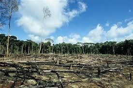 Risultati immagini per foreste pluviali