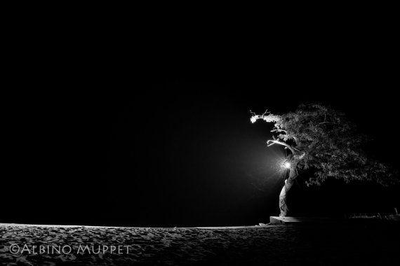 Night time long exposure of bugs flying around a lit tree on Lake Malawi, Malawi