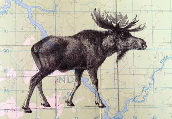 Moose Print on Vintage Map Canada  5 x 7 Moose Map by CrowBiz