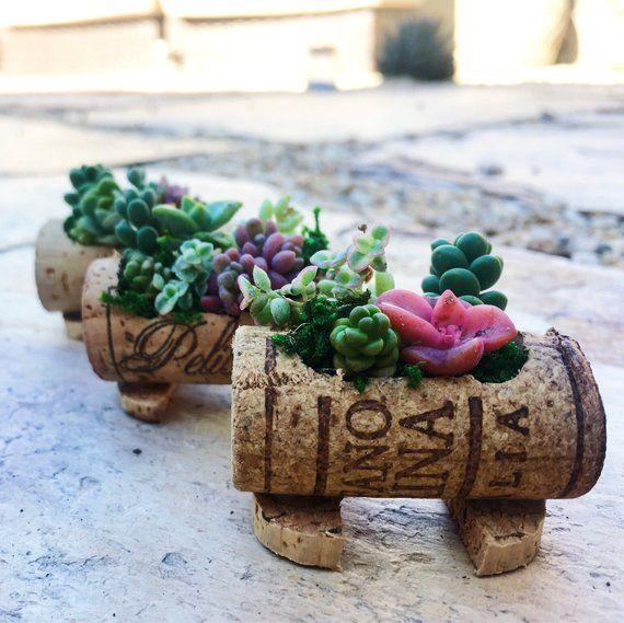 Cork Boutonniere: Succulent MicroGardens In Wine Cork Live Succulents In